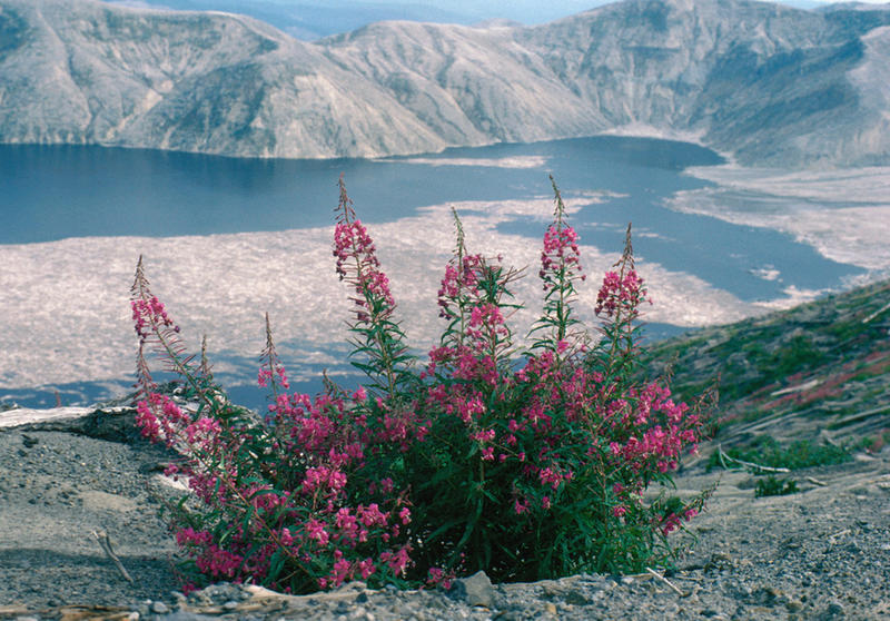 Mount St. Helens 36