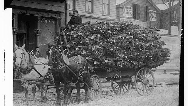 mark-carr-xmas-tree-seller-1